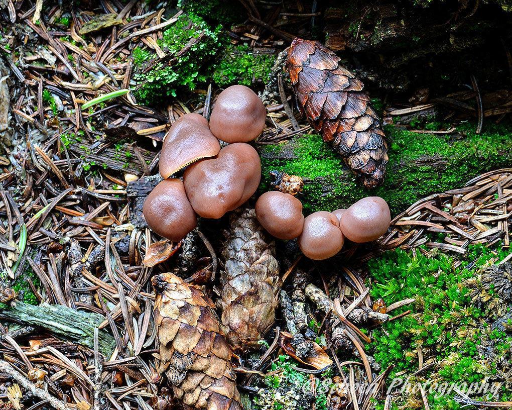 Mushroom 014