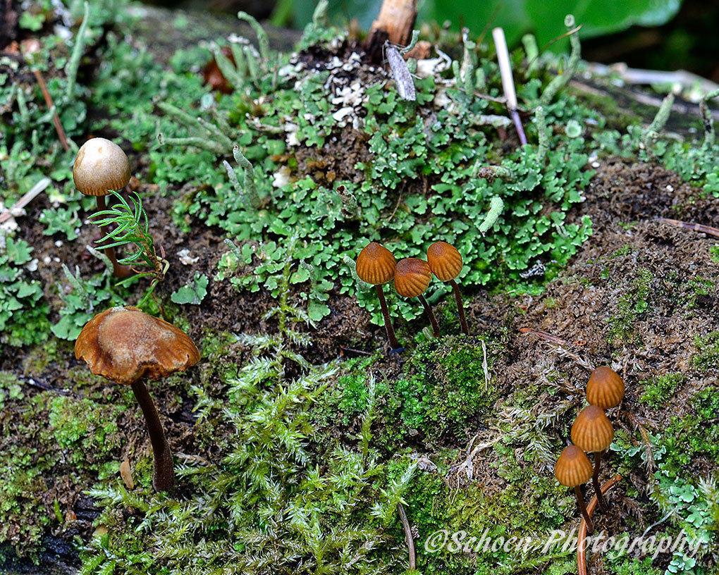 Mushroom 022