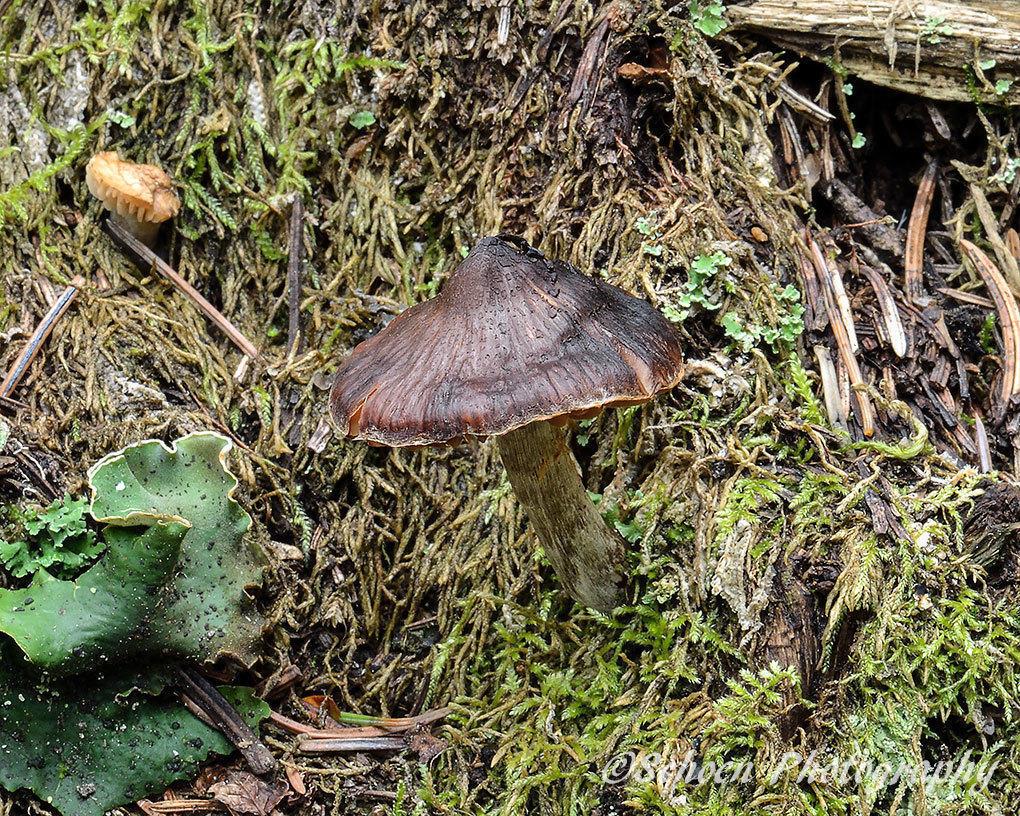 Mushroom 034
