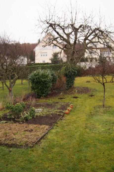 Beet, neue Heidelbeeren und alter Kirschbaum