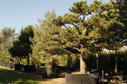 Bäume im Verkaufsbereich