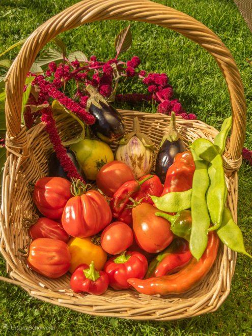 Frisch geerntetes Gemüse aus dem Garten