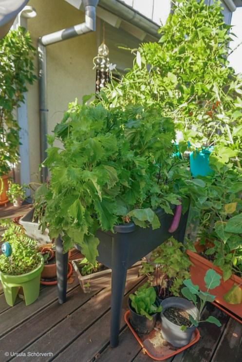 Im Sommer die Bepflanzung