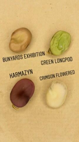 Sortenvielfalt Puffbohnen
