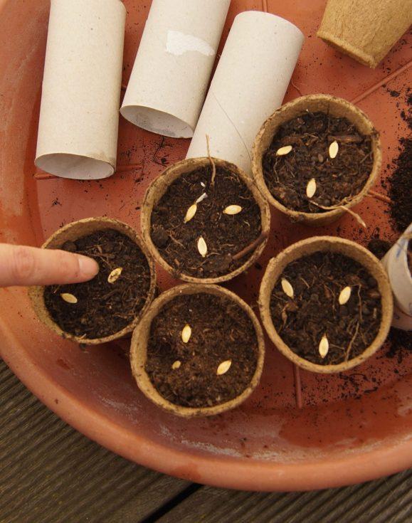 Aussaat in Kompostierbare Anzuchttöpfe