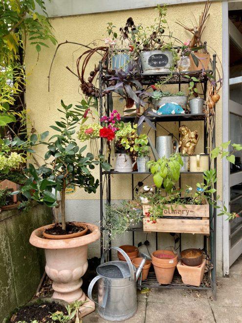 Gartenregal im Schatten mit Sukkulenten.