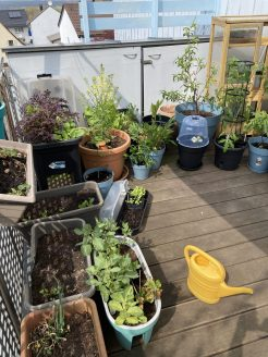 Balkon Gemüse Garten im April