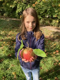 Die Äpfel sind in diesem Jahr wirklich saftig lecker.