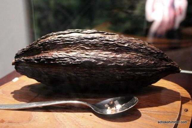 Kakaoreise (3)