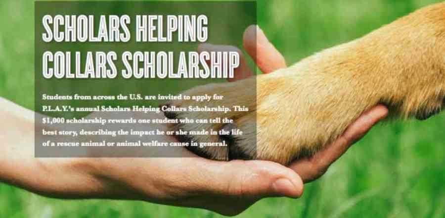 Scholars Helping  Collars Scholarship