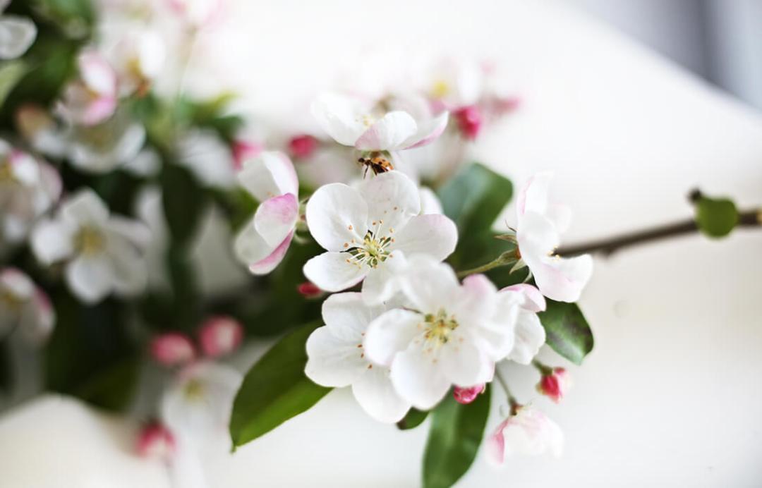schonhalbelf-monatsrueckblick-april-blueten-fruehling-sommer-sonne-backen-krimi