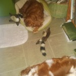 Life is good: Puck, Stella and Artemis