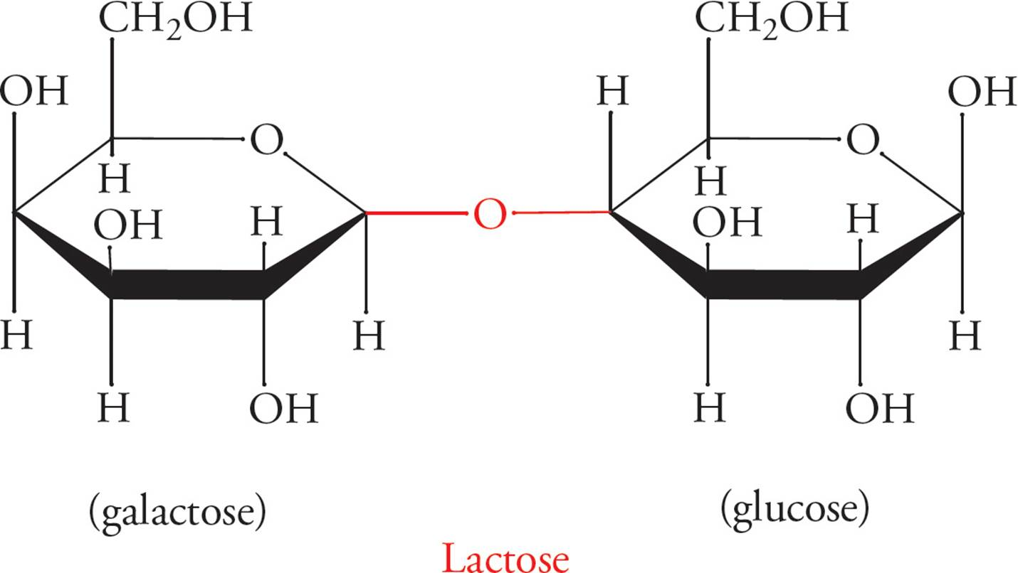 Biologically Important Molecules