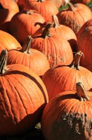 Many cider mills offer pumpkin patches to their patrons.