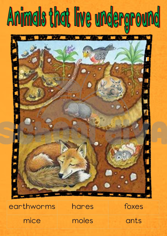 Animals That Lives Underground