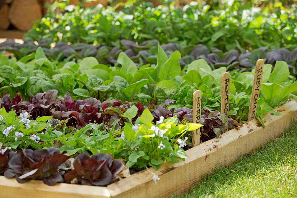 Growing Vegetables In School Gardens RHS Campaign For