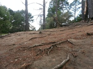 The green on Hole 1 at DeLaveaga, with hard soil and exposed roots, offers plenty of chances for the disc to catch an edge and roll away. Photo by Jack Trageser
