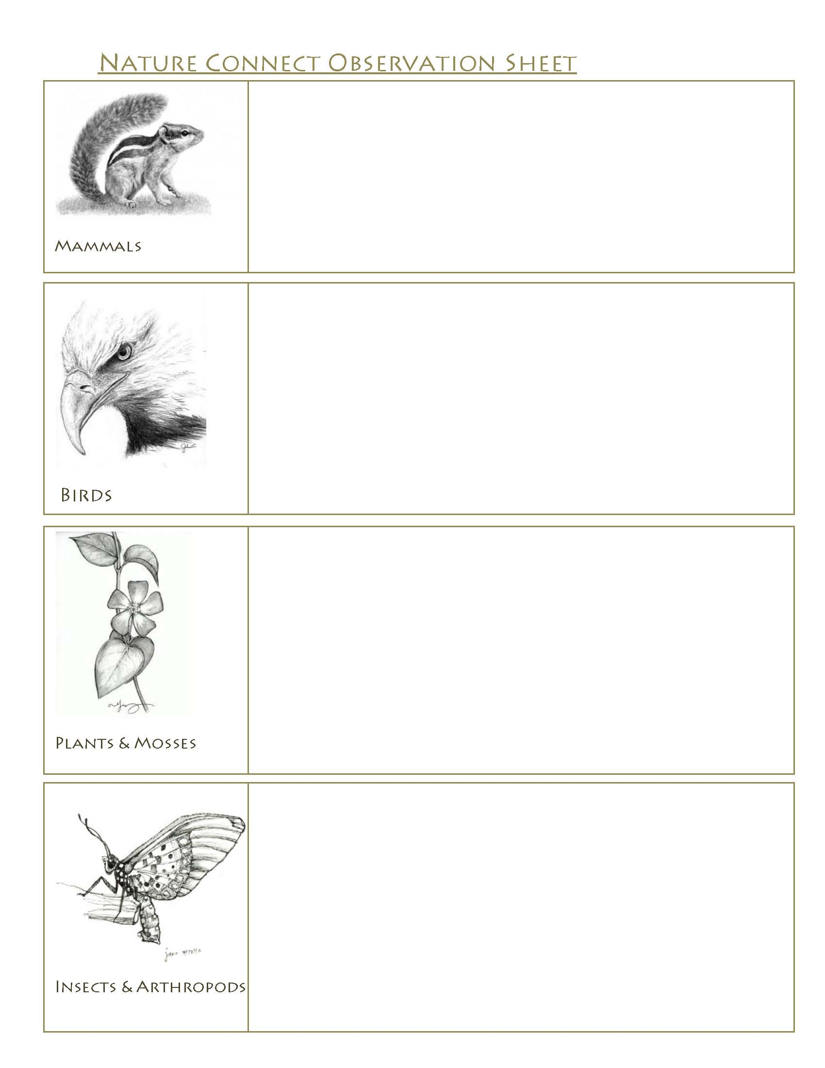 Wildlife Observation Work Sheet