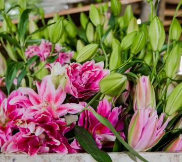 Flowers in Swellendam