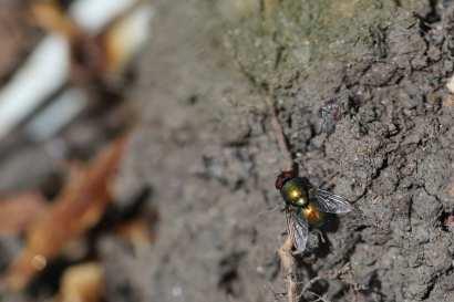187 sitting fly web