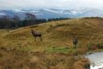 Der Highland Park, der auf unserer Familienreise Schottland besucht werden kann, beheimatet viele einheimische Tierarten.