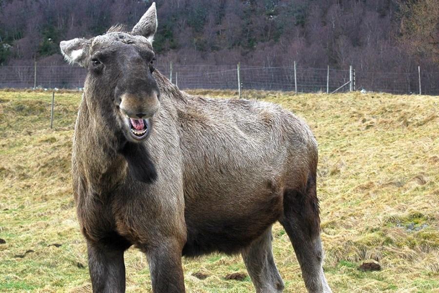 Ein Besuch im Highland Park gehört zu jeder Familienreise durch Schottland.