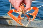Shellfish und Meeresfrüchte sind auf Genussreisen durch Schottland und die Highlands beliebt.