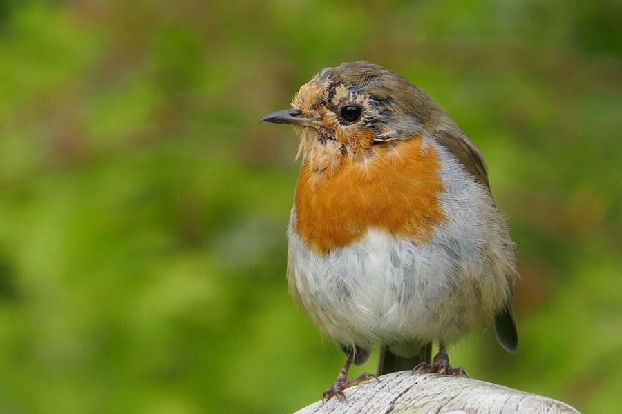 Der Glen Affric Kintail Way in Schottland eignet sich aufgrund seiner Abgeschiedenheit zur Tierbeobachtung.