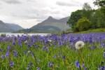 Die Individualreise auf dem West Highland Way fuehrt von Glasgow bis nach Fort William.
