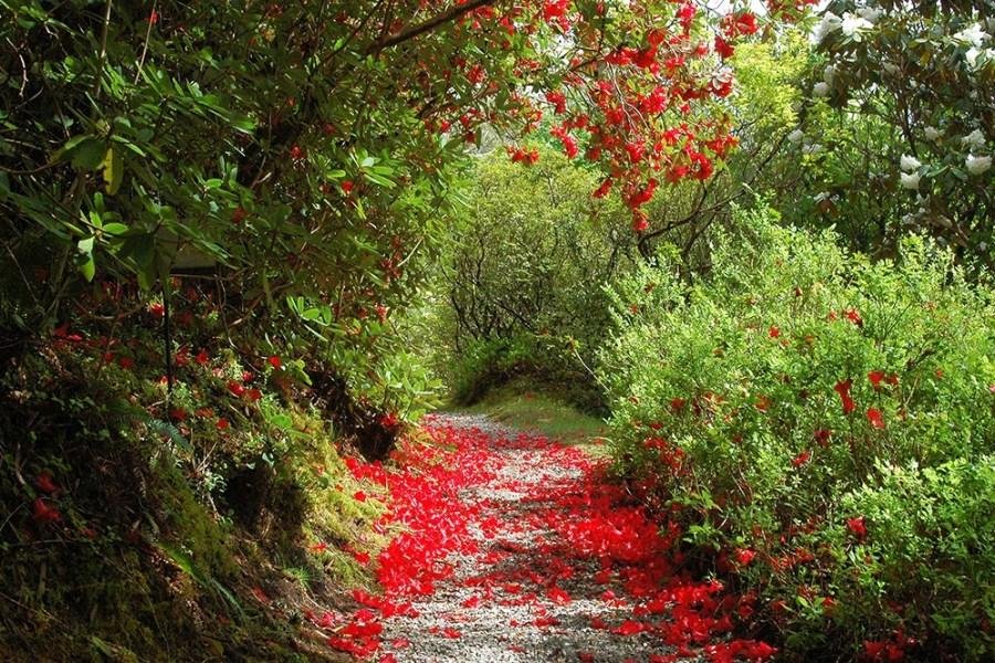 Wenn Sie Natur lieben, dann planen Sie Ihre Urlaubsreise durch Schottland mit uns.