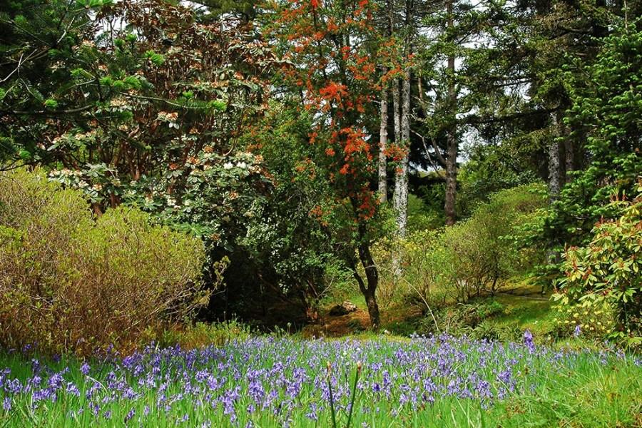 Der Mai ist einer der schönsten Monate um eine Reise nach Schottland zu unternehmen und dort seinen Urlaub zu verbringen.