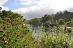 Perthshire ist fuer klare Fluesse und schoene Waldlandschaften bekannt und darum Zentrum unserer Standortreise Schottland.