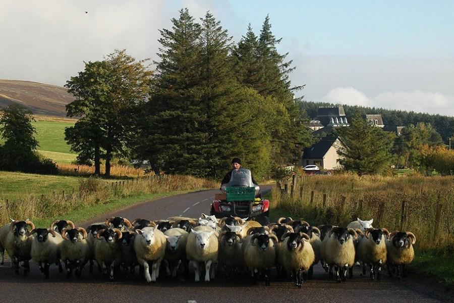 Ein Teil der Speyside gehoert zum Cairngorm Nationalpark, den wir im Rahmen der Whiskyreise besuchen werden.
