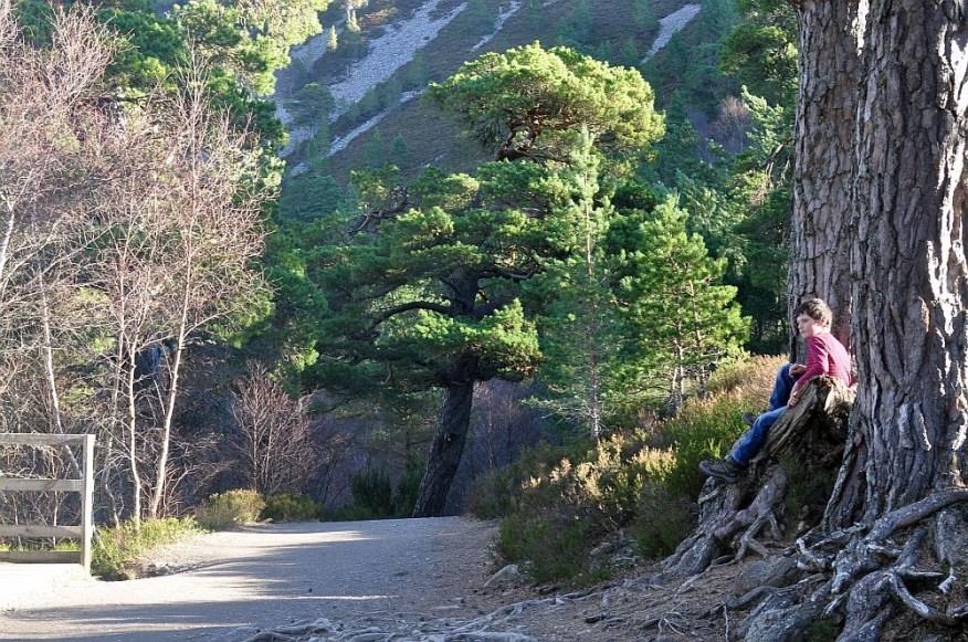 Hier finden Sie unsere Auswahl der Top 5 Wanderungen fuer Familien in den Cairngorms.
