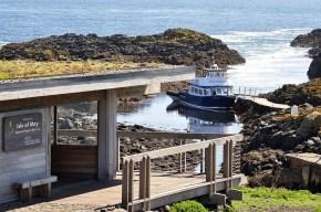 Die Isle of May kann man per Bootsfahrt von April bis Oktober besuchen.