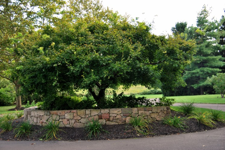 tree-care-Doylestown-pa