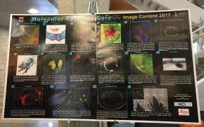 MicroscopyContest-LSW2017