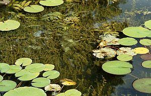 Teich - Pond