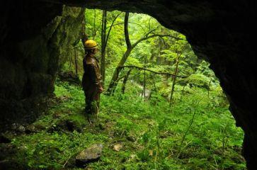 Prales pri Jazierkovej jaskyni