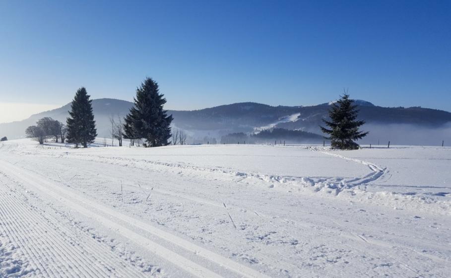 Langlaufen im Schwarzwald