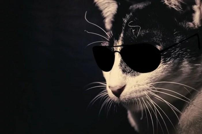 Katze als mutmaßlicher Einbrecher ermittelt