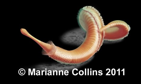 Priapulid worm – Burgess Shale fossil reconstruction by Marianne Collins