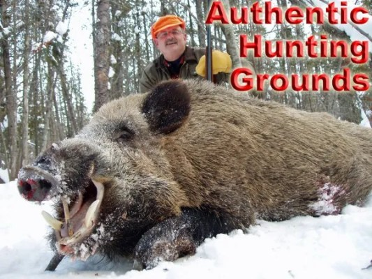 Giant Boar Hunting – Experience the Snow Hunts
