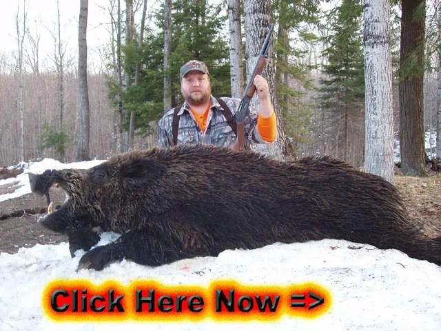 Winter Hunts at Bear Mountain