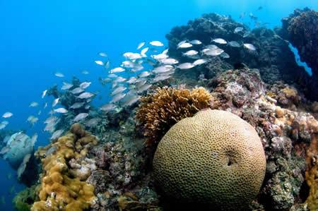 Abrolhos corals