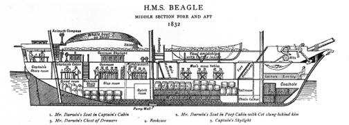 Sketch of Beagle Interior