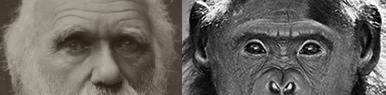 image of Darwin and a bonabo chimp