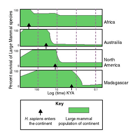 Graph of extinction compared to arrival of humans