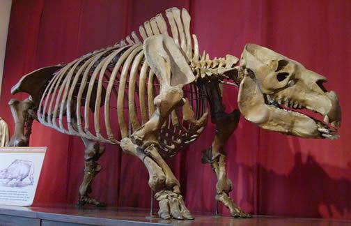 toxodon skeleton