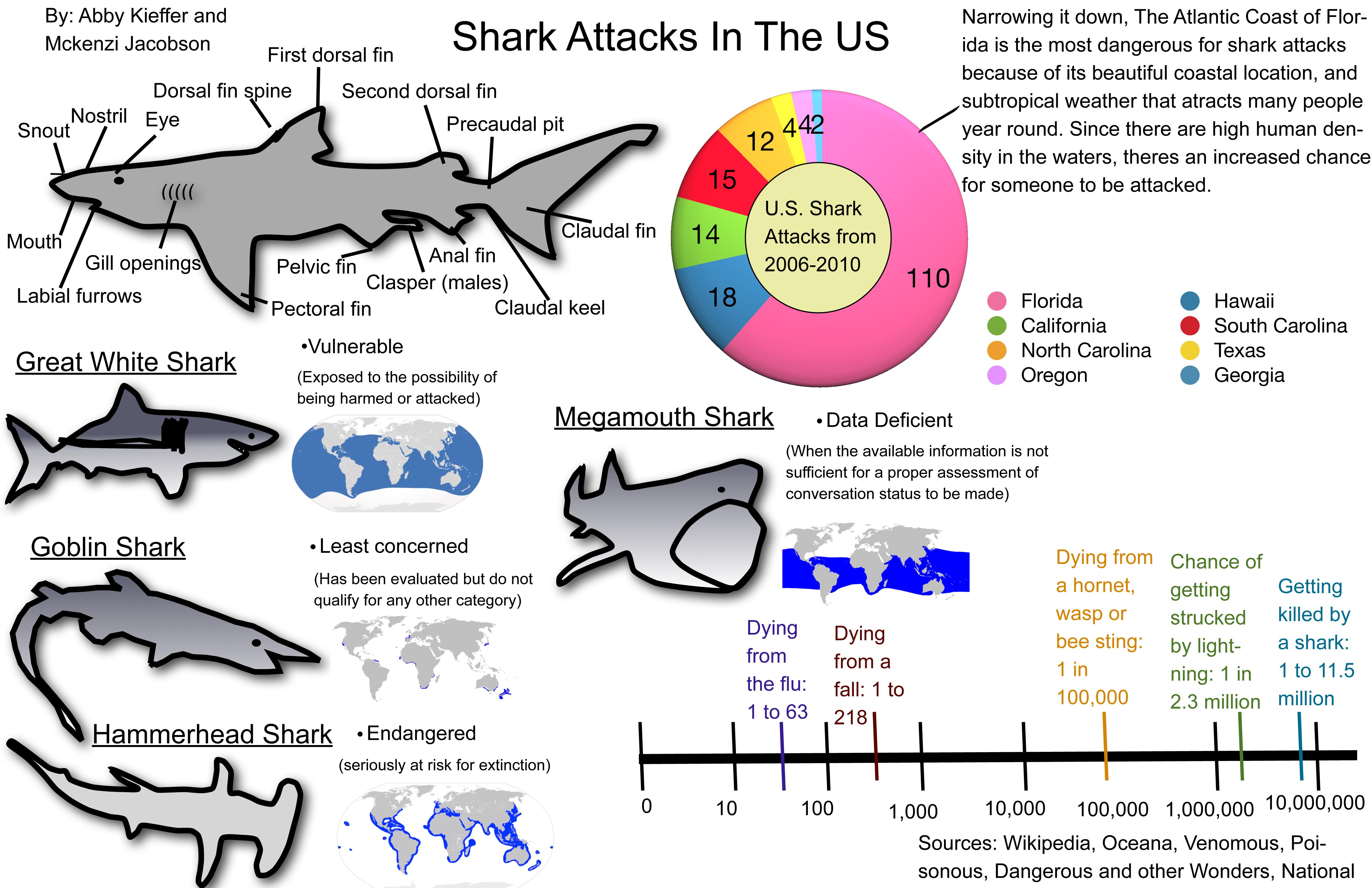 Infographic Shark Attacks In The Us Sli
